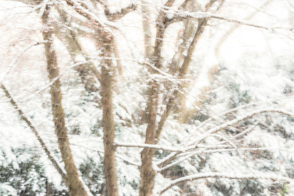 Tree in the snow blur by jernst1779