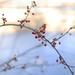 Berries by the Lake by loweygrace