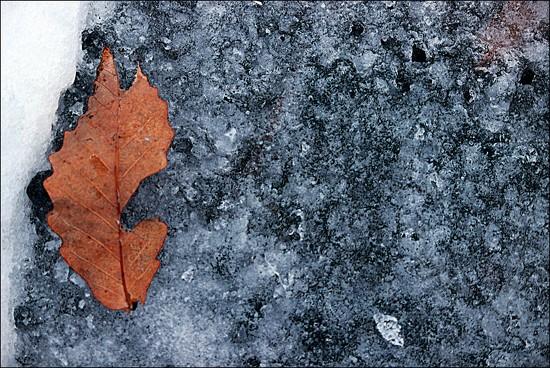 Frozen Memory by olivetreeann