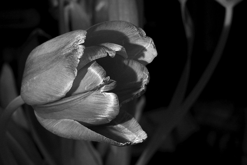 Tulip composition by homeschoolmom
