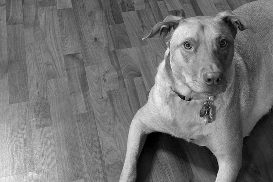 Seamus in B&W by homeschoolmom