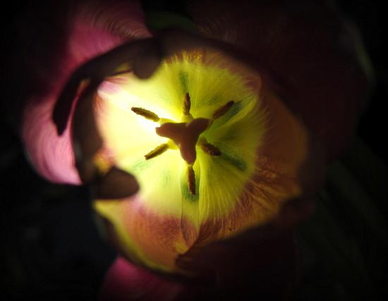 Light on the inside by homeschoolmom