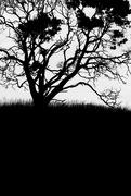8th Feb 2018 - treehouette