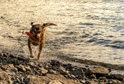 9th Feb 2018 - Canine Olympics!