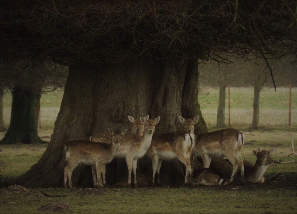 Deer under a linden tree by suzanne234