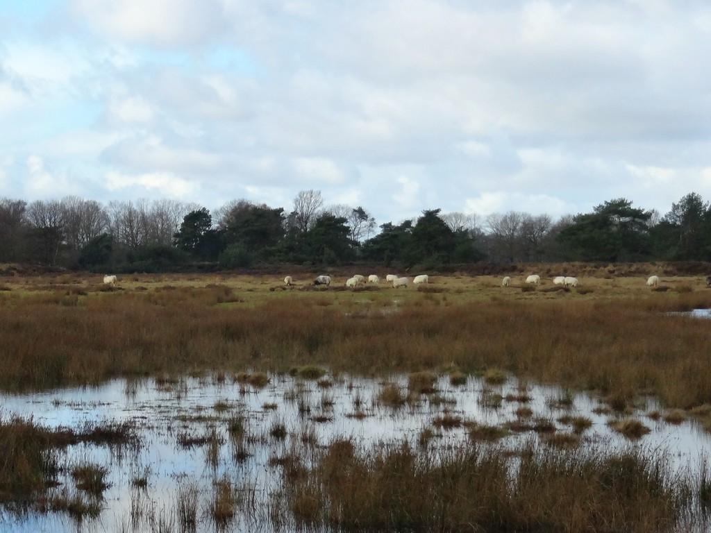 grazing by gijsje