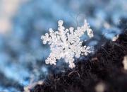 10th Feb 2018 - More Snowflakes