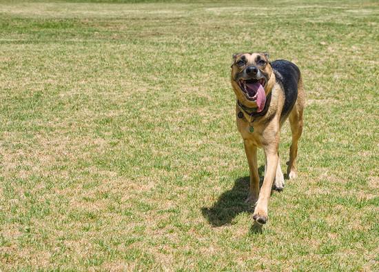 Pixie Running by salza