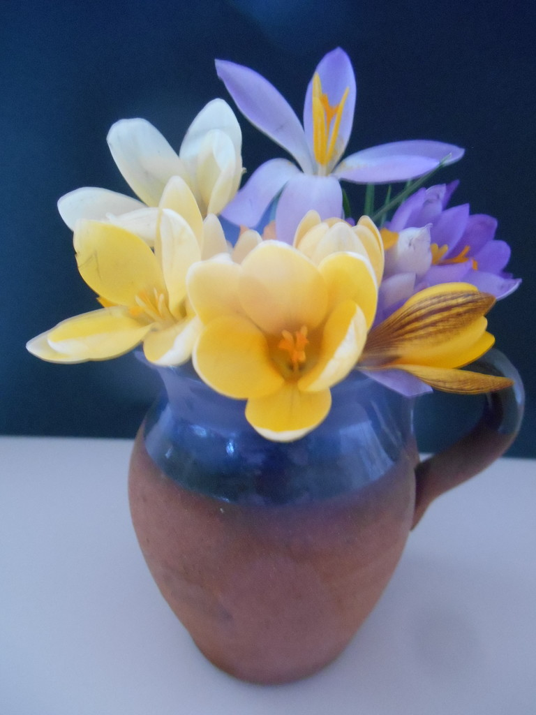 Crocuses picked from the garden. by snowy