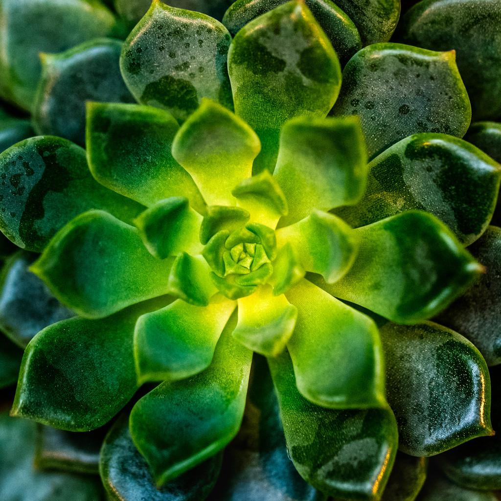 Green by rosiekerr
