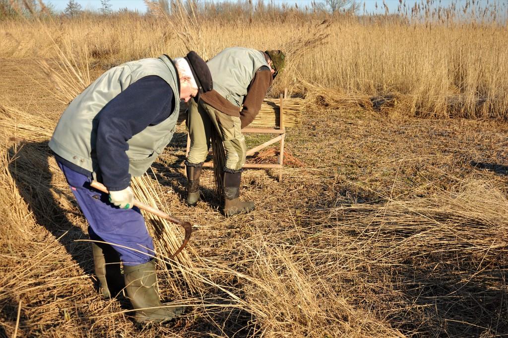 Cutting the cane by stimuloog