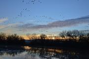 11th Feb 2018 - sunset at Ladd S. Gordon wildlife preserve