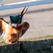 Kingfisher-doing the shake, rattle and roll water removal
