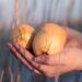 Atalanta's apples