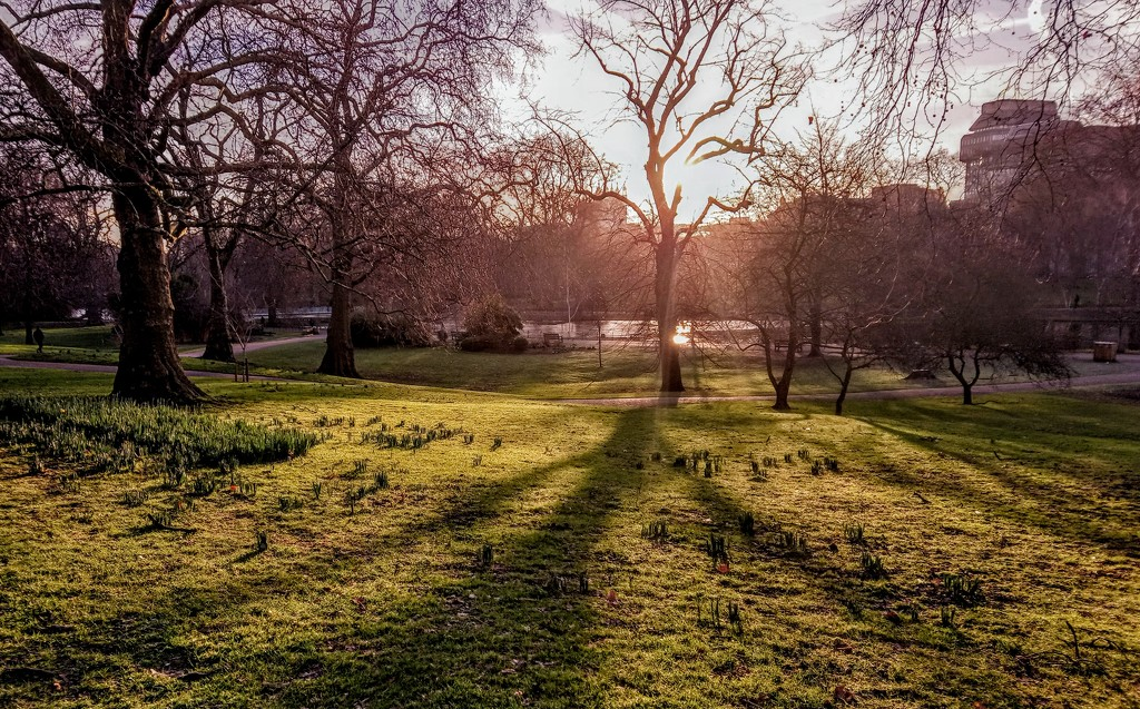 St James's Park morning by boxplayer