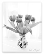 12th Feb 2018 - Tulips in B/W