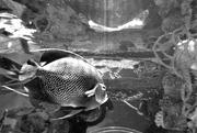 8th Feb 2018 - aquarium in black & white