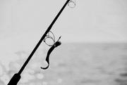 7th Feb 2018 - Gone Fishin'