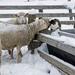 February Words - Animal by farmreporter