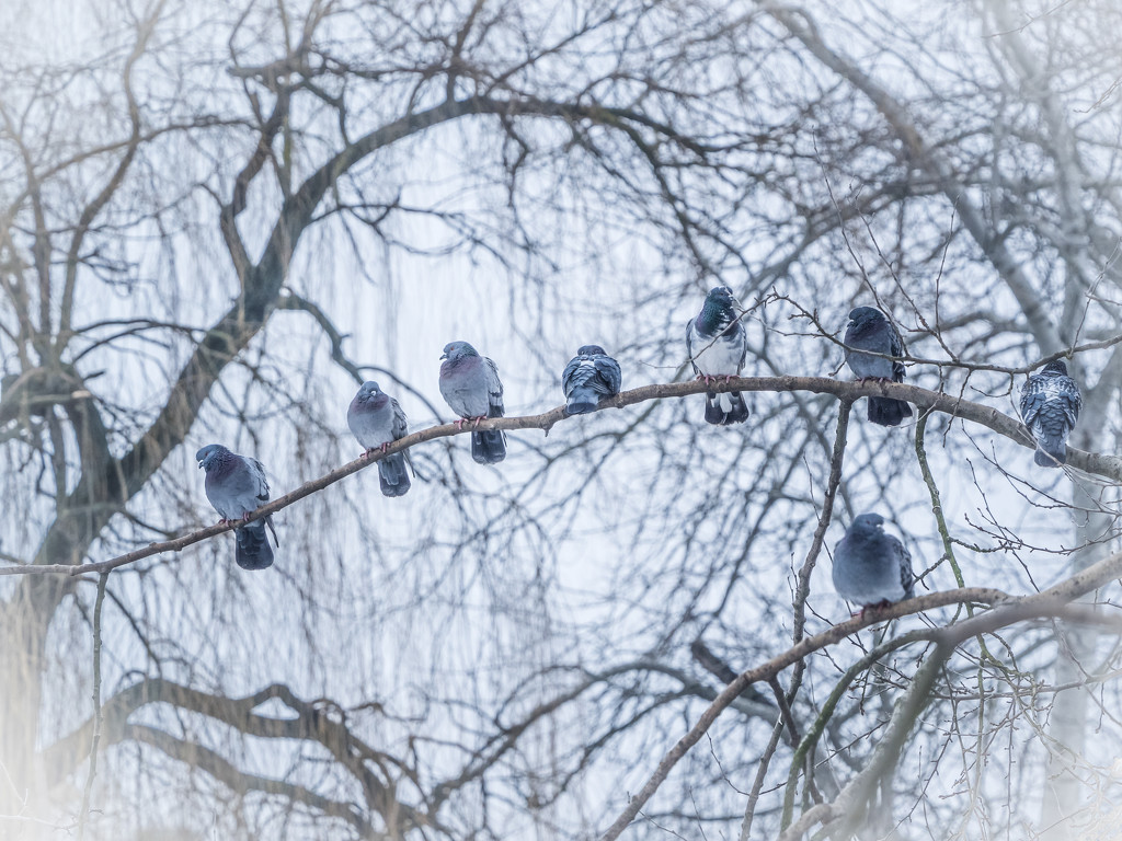 Waiting for spring by haskar