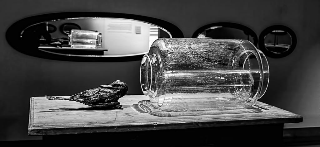 Bird with bottle by golftragic