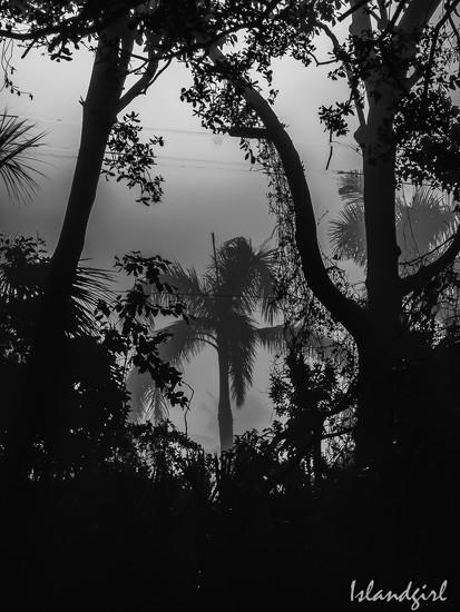 Palm Tree Framed  by radiogirl