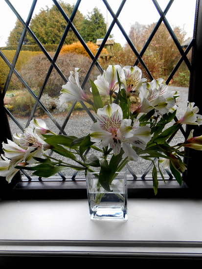 Flowers n the window... by snowy