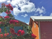 9th Feb 2018 - Colors of Guadeloupe.