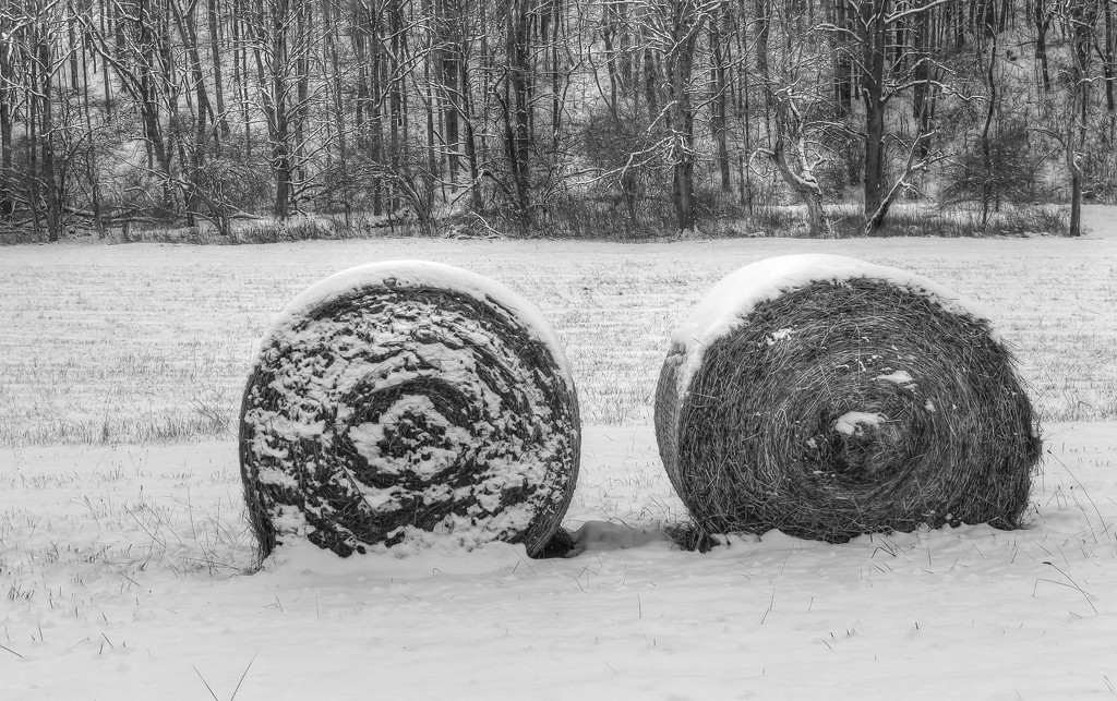 Bales in the snow by mittens