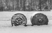12th Feb 2018 - Bales in the snow