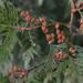 Winter Color 2