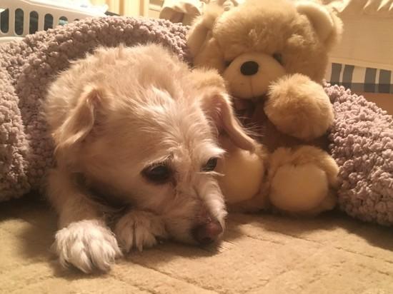 Snuggles by chloette