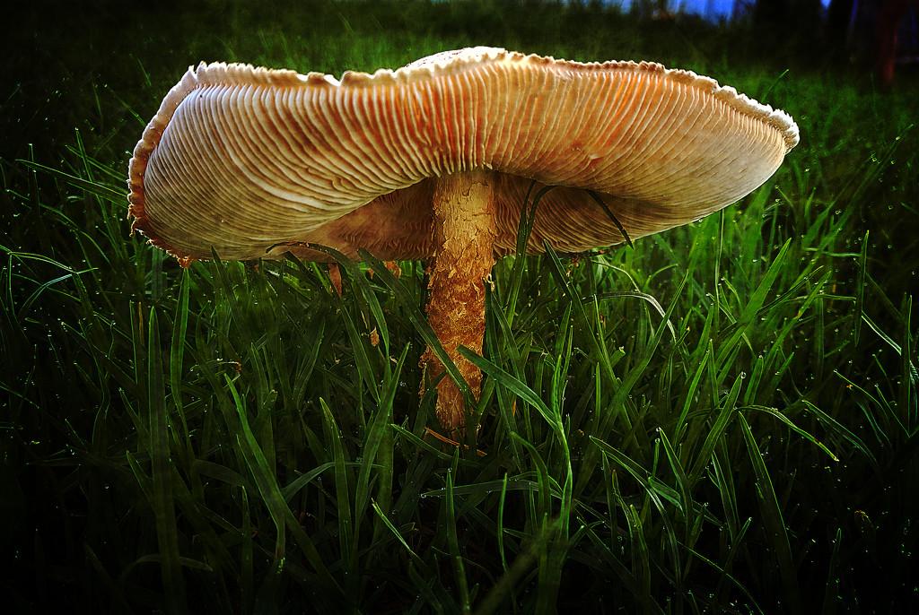 Fungi by rustymonkey