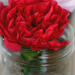 Carnation in a Jar