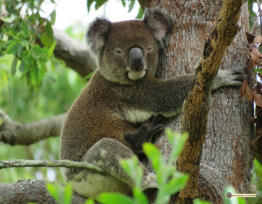 mine! by koalagardens