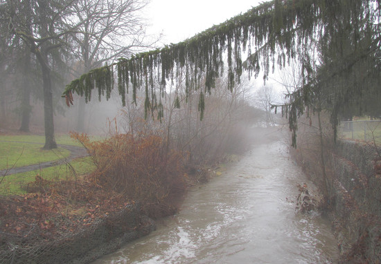 Fog at the creek by mittens