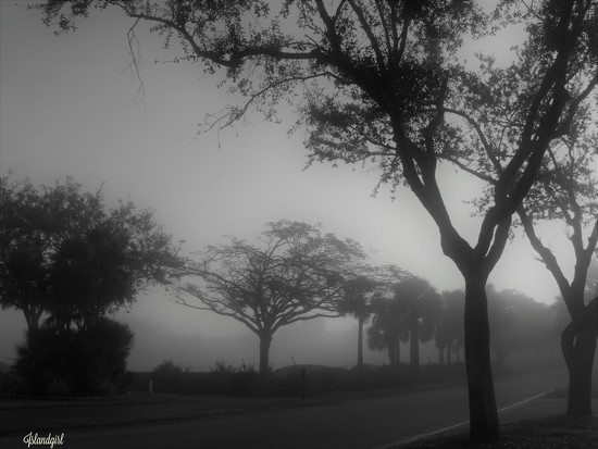 Foggy Morning by radiogirl