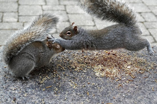 Squirrel squabbles by berelaxed