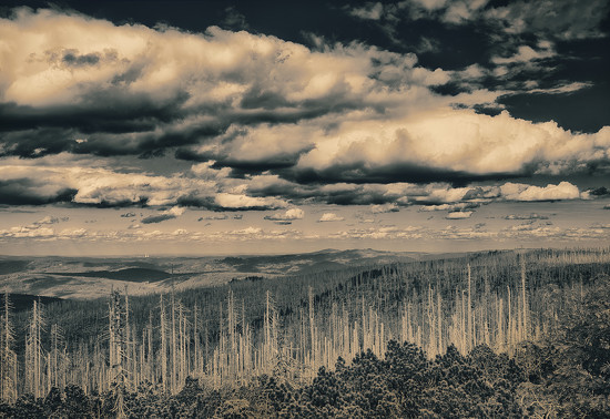 Bohemian forest by jerome