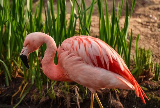Flamingo Friday '18 06 by stray_shooter