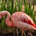 Flamingo Friday '18 06