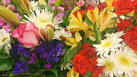 Valentine's Flowers by harbie