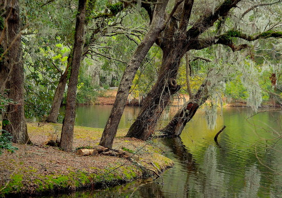 By the lake at the state park, Charleston, SC by congaree