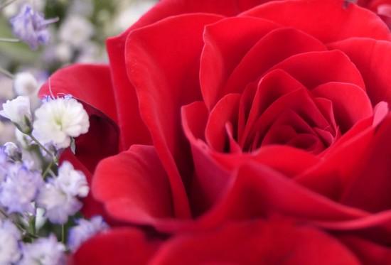 I Love You! by carole_sandford