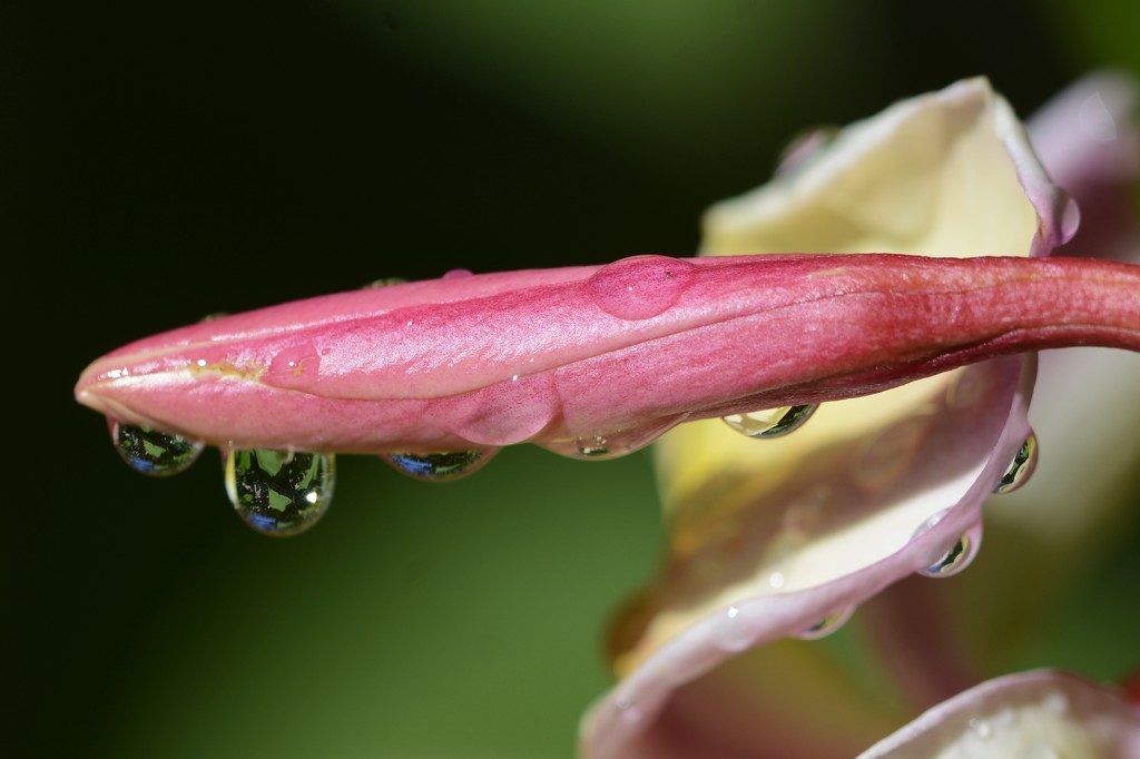 Garden Refraction_DSC7791 by merrelyn