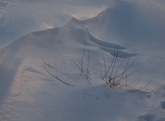 Snowscape by selkie