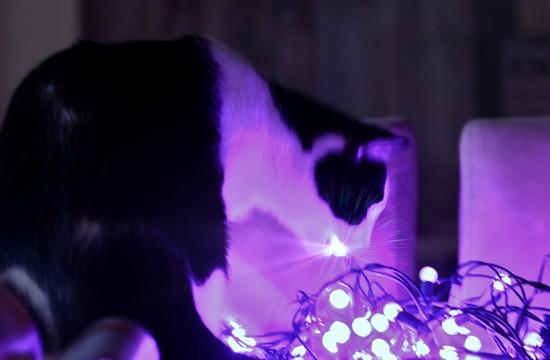 Curiosity Killed The Cat by lynnz