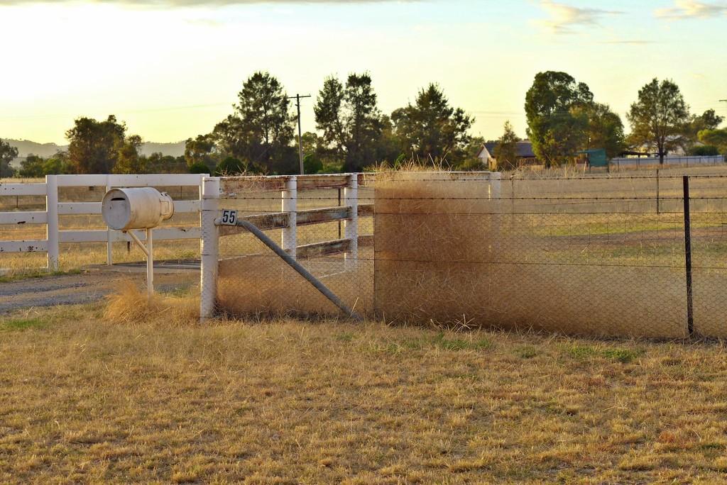 Hairy Panic Grass by leggzy