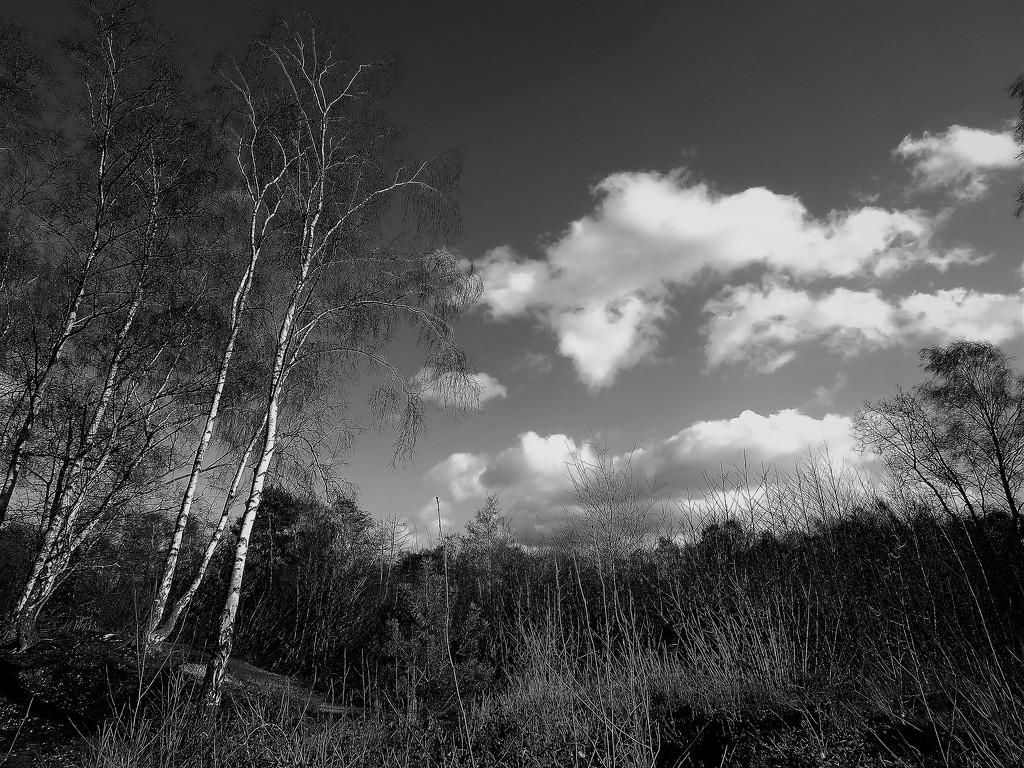 Hartsholme Park  by phil_sandford