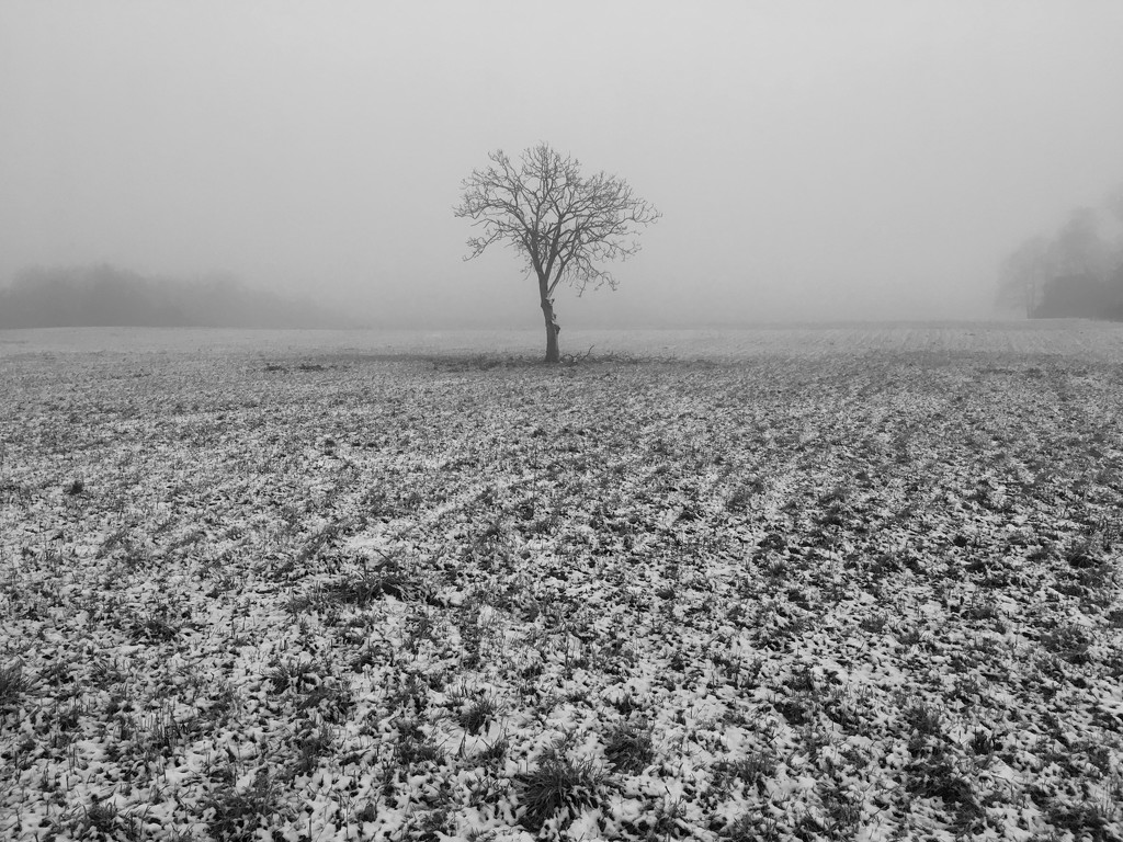 Shivering walnut tree by ducasrouge